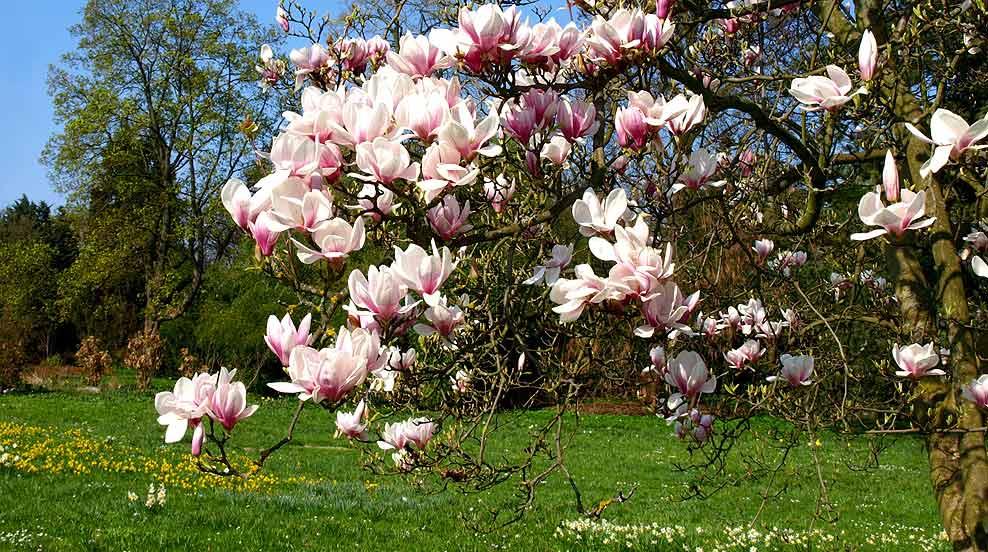 Frühlingspauschale